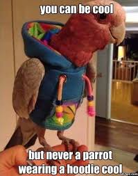 parrot hoodie ottawa seo experts managers